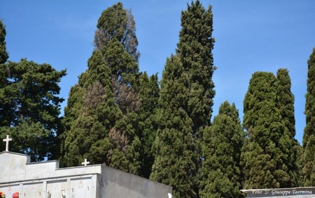 albero della discordia 2