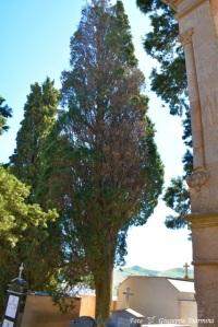 albero della discordia0