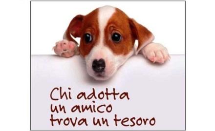 locandina-adozione-cane1