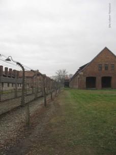 Auschwitz Birkenau_00004