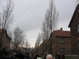 Auschwitz Birkenau_00027