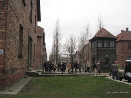 Auschwitz Birkenau_00035