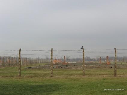 Auschwitz Birkenau_00061